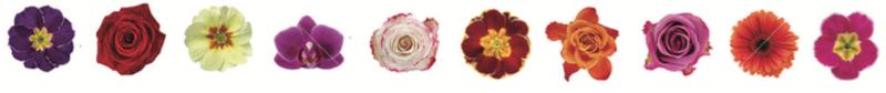 Dean-flower-border